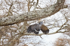 From my article on bird photography in Tanzania.