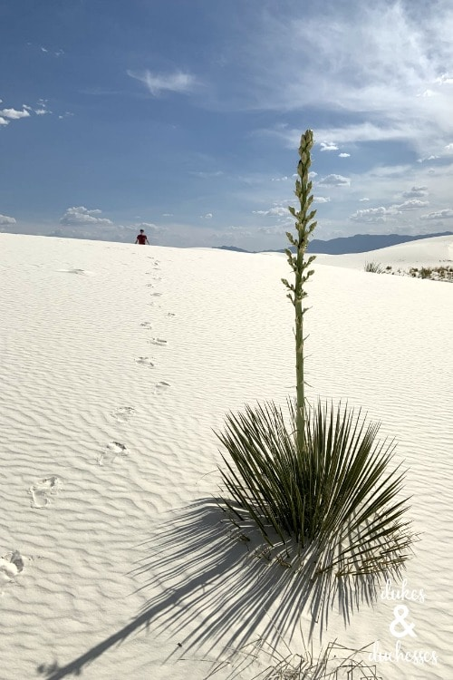 Favorite US National Parks - White Sands National Monument